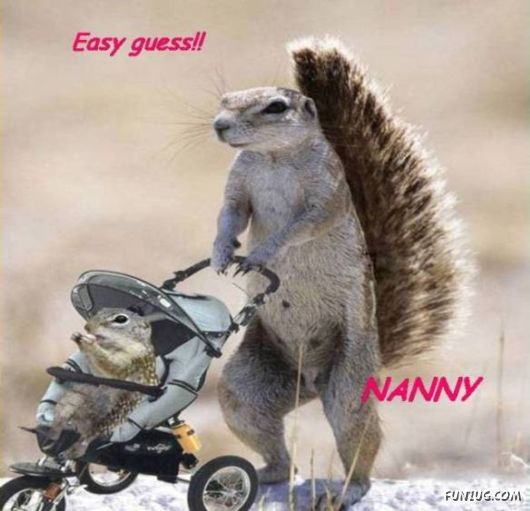 Funny Animals And Their Human-Like Roles