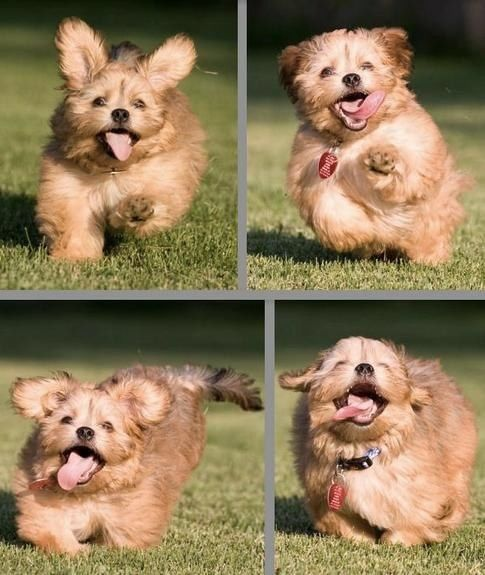 Ultimate Collection Of Extremely Happy Animals