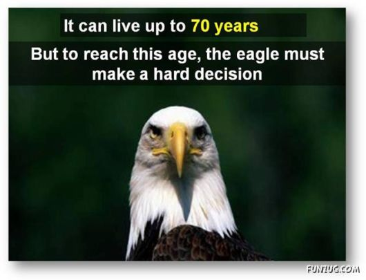 Things To Learn From An Eagle