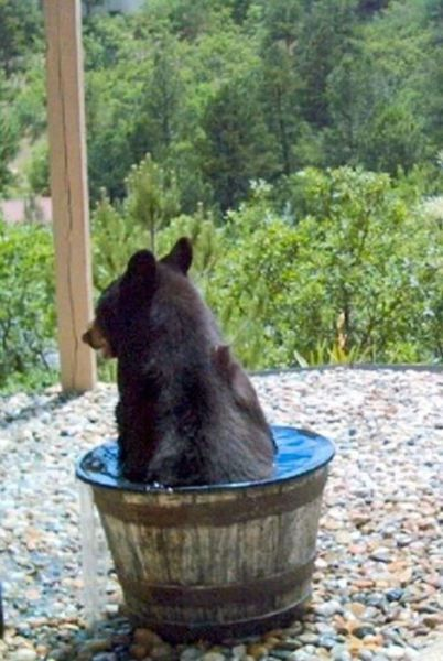 Water Bucket Kept Disappearing
