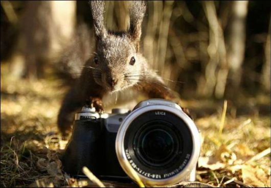 Cute Notty Animals Pictures